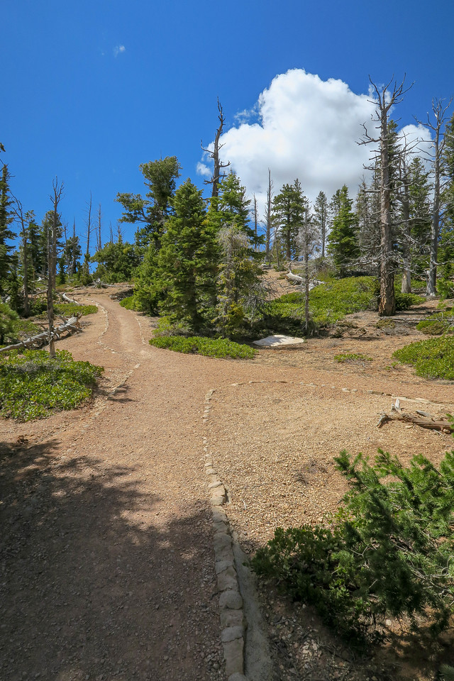 Bristlecone Loop Trail -- 9,000'