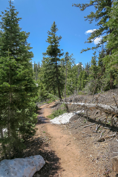 Bristlecone Loop Trail -- 9,080'
