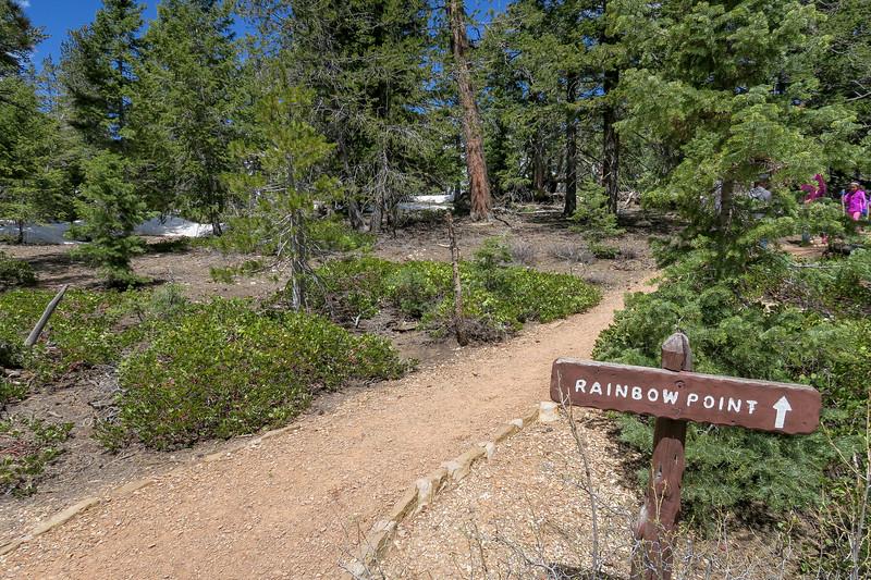 Bristlecone Loop-Riggs Spring Loop Trail Junction -- 9,070'
