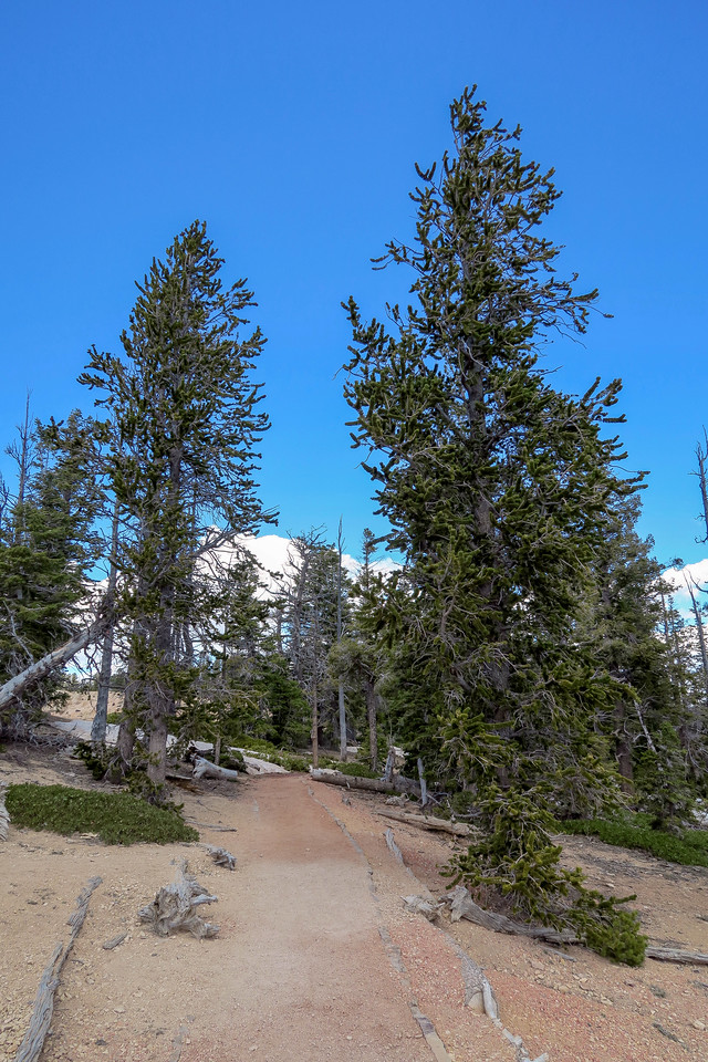 Bristlecone Loop Trail -- 9,050'