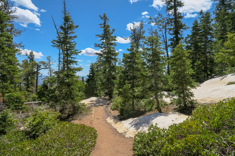 Bristlecone Loop Trail -- 9,020'