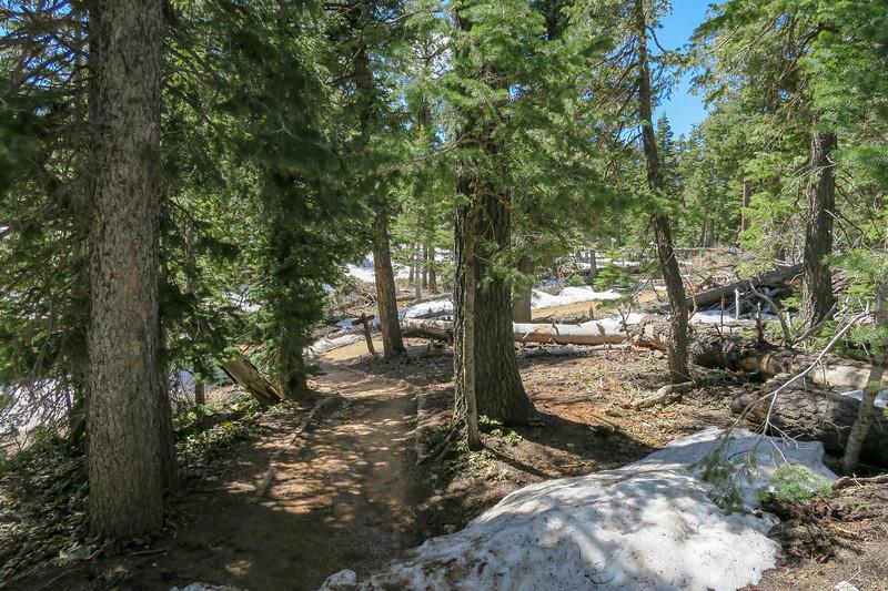 Bristlecone Loop Trail -- 9,060'