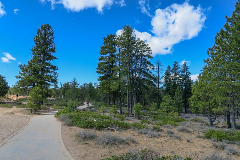 Rim Trail -- 8,000'