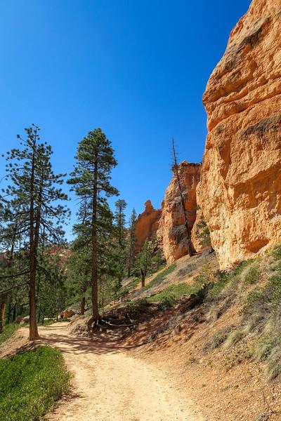 Navajo Loop Trail -- 7,600'