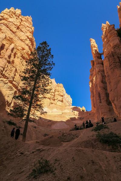 Navajo Loop Trail -- 7,720'