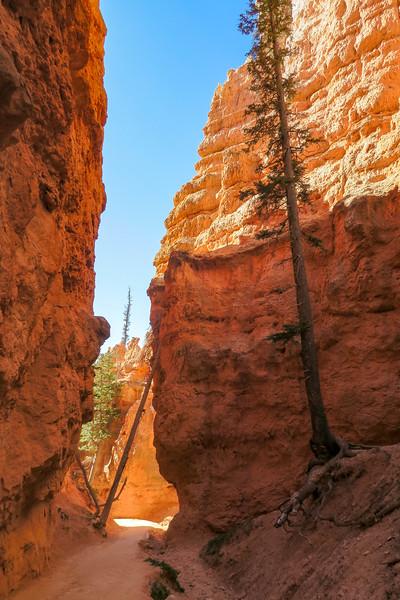 Navajo Loop Trail -- 7,680'