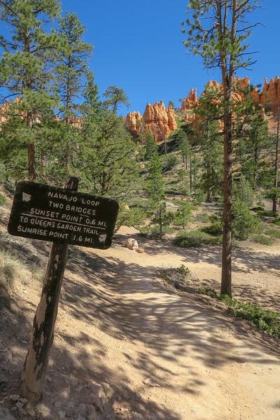 Navajo Loop-Queen's Garden Trail Junction -- 7,490'
