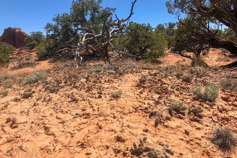 Mesa Arch Trail -- 6,150'