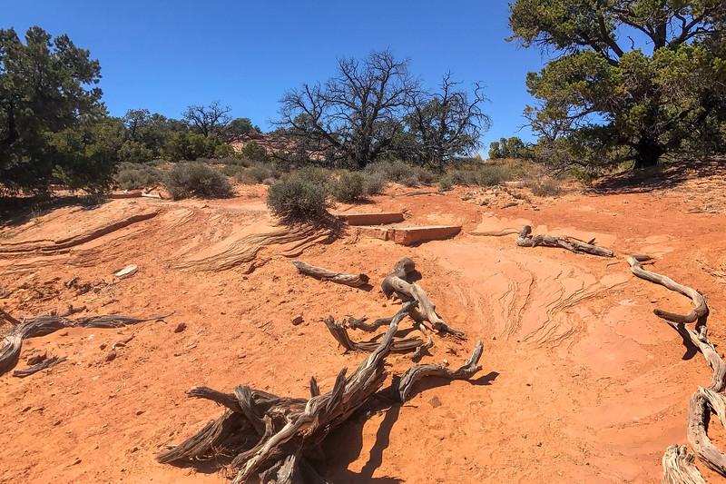 Mesa Arch Trail -- 6,130'