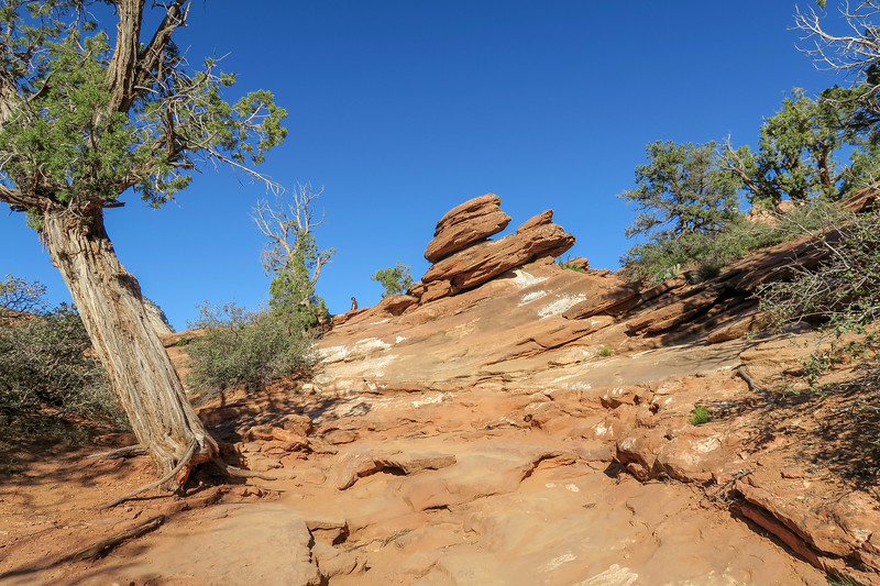 Canyon Overlook Trail -- 5,240'