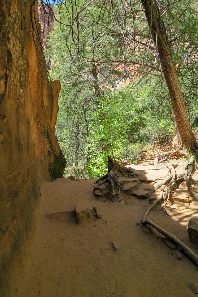 Middle Emerald Pool Trail  -- 4,470'
