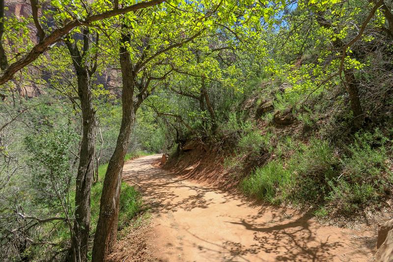 Lower Emerald Pool Trail  -- 4,320'