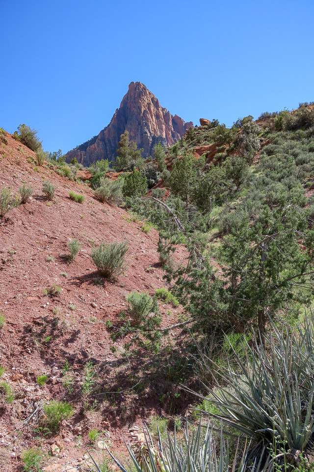 Watchman Trail -- 3,980'
