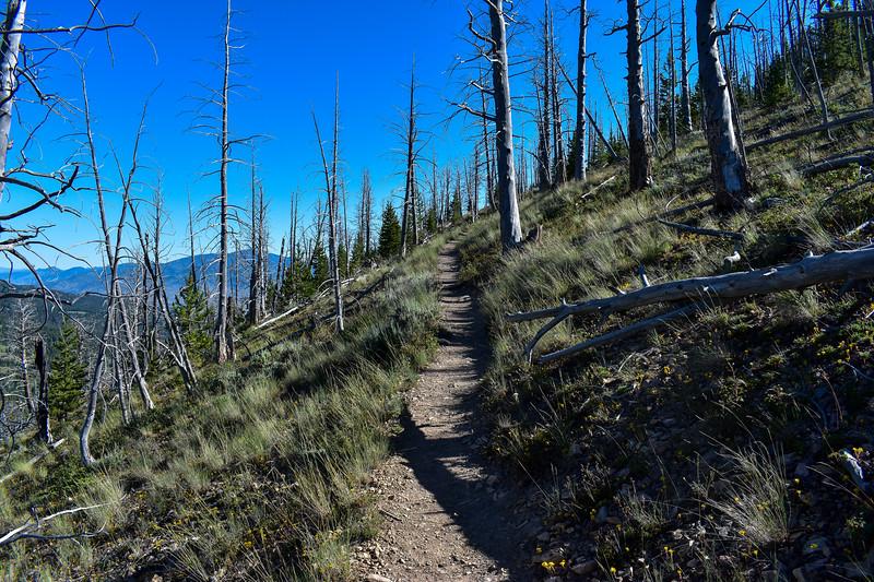 Bunsen Peak Trail -- 7,900'
