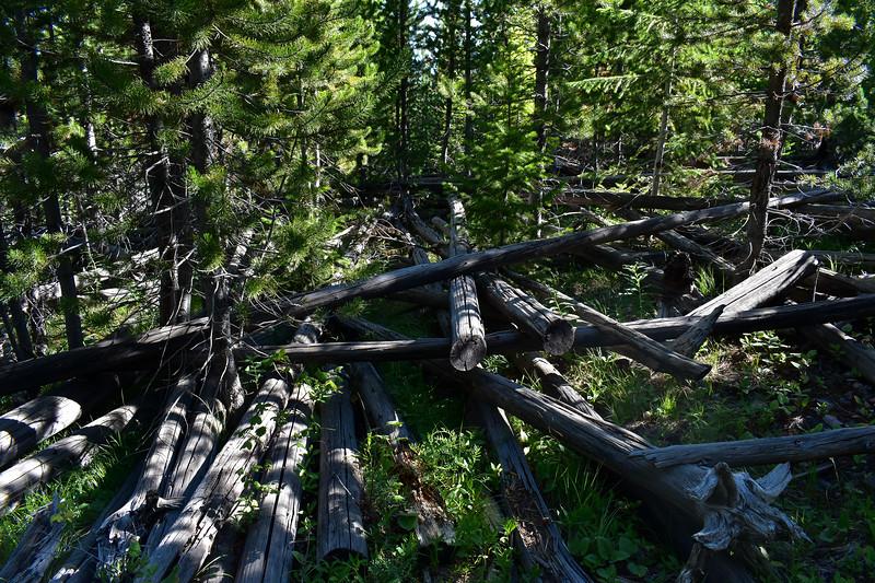 Bunsen Peak Trail -- 7,600'