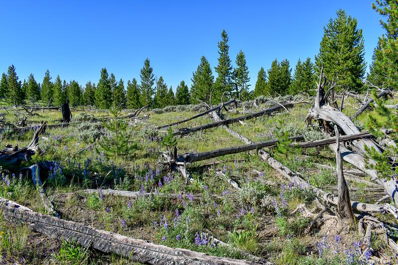 Bunsen Peak Trail -- 7,430'