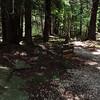 Elakala trailhead near Blackwater Falls Lodge and Conference Center