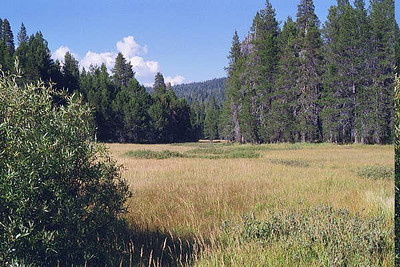 McGurk Meadow Yosemite August 2000
