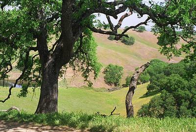 Pacheco Park April 2000