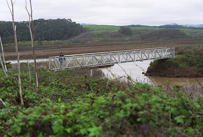 Pescadero Marsh February 2000