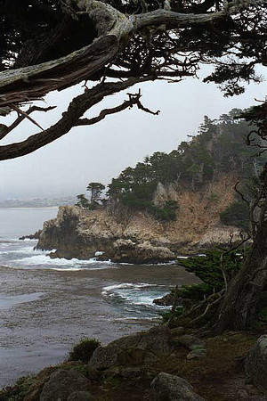 Point Lobos July 2000