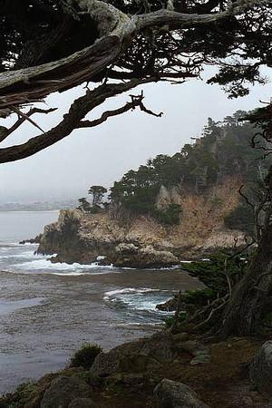 Point Lobos July 2000