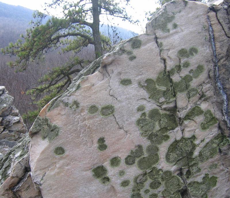 Lichen on White Rocks