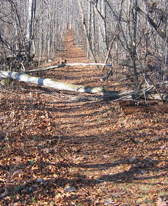 Dickey Ridge Trail 2006-11