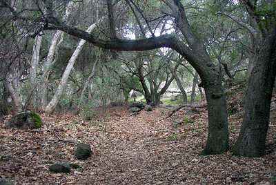 2006 January Pinnacles National Monument, California.