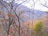 View through Witch Hazel (Hamamelis virginiana)