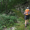 Sybille passes Wild Hydrangea (Hydrangea arborescens)