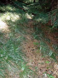 Trail to Three Lynx?  It is definitely a trail, as it was blazed.