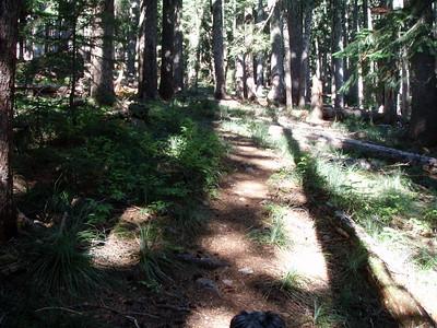 Typical Trail Segment