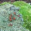 Mushroom, Lichen & Moss