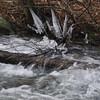 Ice along Hughes River