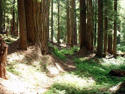 Elk Lake Creek Trail - beginning