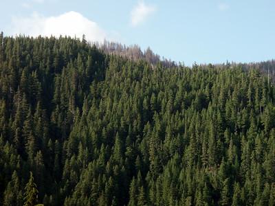 Damage from the Schreiner peak fire last year