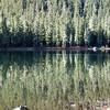 Ducks swimming on Timber Lake