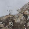 Bird tracks and lichens