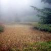 Tarzan Springs bog/meadow