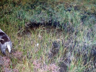 Part of Tarzan Springs