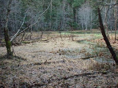 Bog area