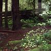 Campsite area #1