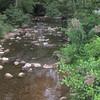 Trumpetweed (Eupatoriadelphus fistulosus) on Conococheague Creek