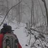 Further up Jenkins Gap Trail