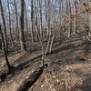 Burnt Area along Jenkins Gap Trail  sans snow (3/4)