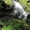 Herb Robert (Geranium robertianum) by the falls