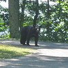 Bear comes to the parking lot as we prepare to start