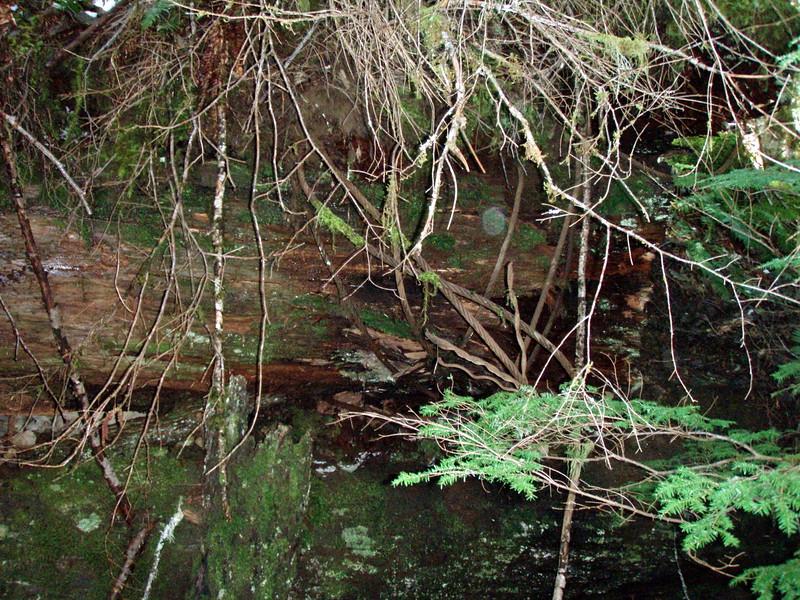 Old logging history