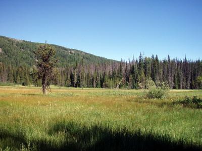Olallie Meadow
